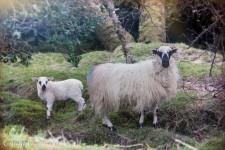 Killarney National Park-9839