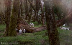 Killarney National Park-9852
