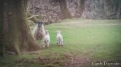 Killarney National Park-9854