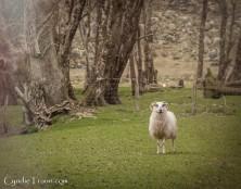 Killarney National Park-9858