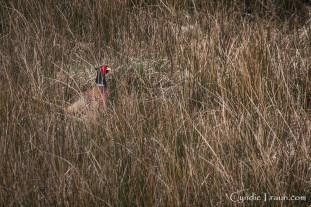 Killarney National Park-9859