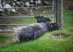 Killarney National Park-9870