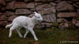 Killarney National Park--9875