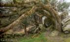 Killarney National Park-9882