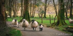 Killarney National Park-9889