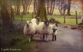 Killarney National Park-9896