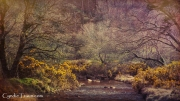 Glendalough-4643
