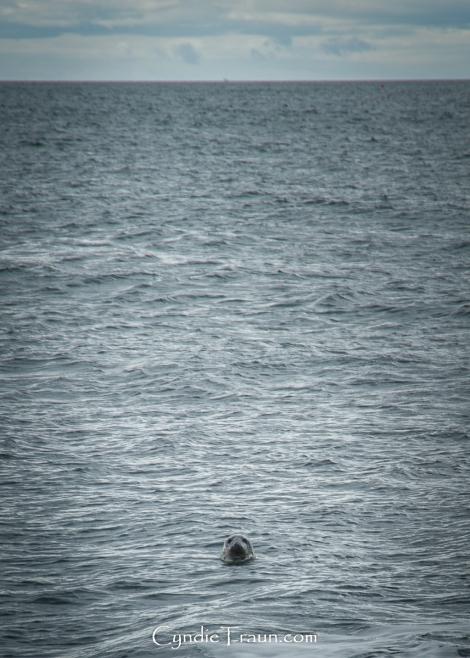 Mermaid_Hook Head-4558